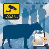 Vets welcome Scottish animal welfare actions