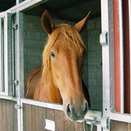 Horse meat results published