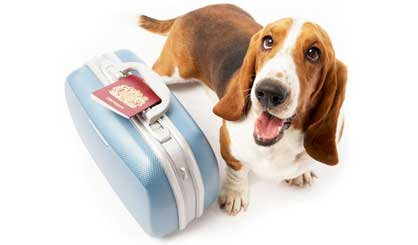Pet travel laws to be relaxed
