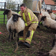 Large animal training for firefighters
