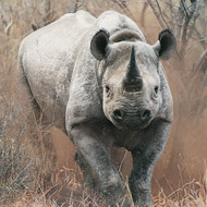 Cameras to prevent poaching