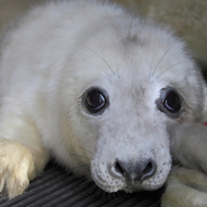 Orphaned seal pups crisis appeal