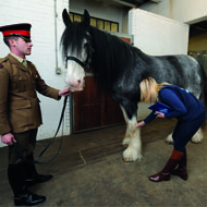 Importance of National Equine Health Survey recognised