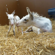 Donkey Sanctuary welcomes its smallest arrival