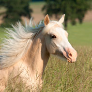 Control of Horses Bill welcomed