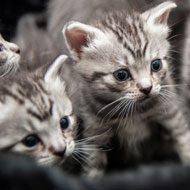 Welfare of Cats Bill introduced in Parliament