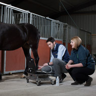 BCF launch free online equine CPD videos