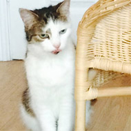 Missing cat reunited with owners after five years