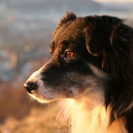 Why some dogs do not respond to epilepsy treatments