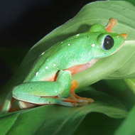 Zoos prevent extinction for many amphibians and reptiles