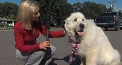 Dog elected as Mayor of Minnesota town