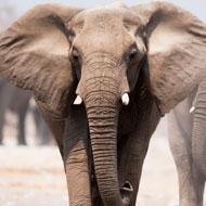 Zambia lifts hunting ban