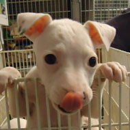 Owner urges others to consider re-homing deaf dogs