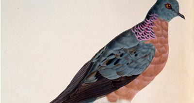 Zoo marks 100th anniversary of extinct bird