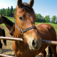 Defra announces agreement to export UK horses to China