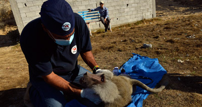 Animals rescued from bombed-out zoo