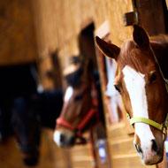 Horse healthcare survey receives outstanding response