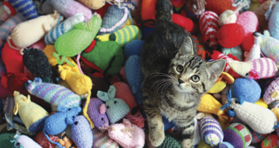Knitters and kittens join forces