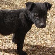 Dog euthanasia sets