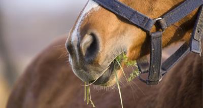 Horse hindgut model to be developed at Surrey