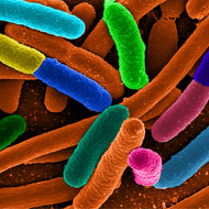 Bacteria are built for survival, E. coli study suggests