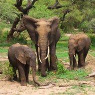 Global wildlife populations halved in 40 years