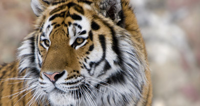 Global wildlife populations halved in 40 years
