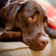 Dog epilepsy research is 'below par'