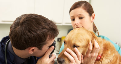 Ninety per cent of vets fear antibiotic resistance