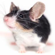 Studentship to improve animal welfare