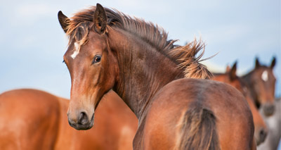&pound2m boost for equine research programme