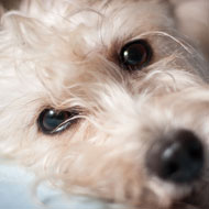 Dogs 'improve wellbeing of cancer patients'