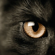 Sight matters more to cats than smell