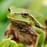 Exotic pet trade to be reviewed in Scotland