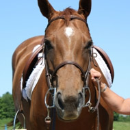 MEP launches action for responsible equine ownership