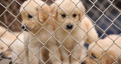 Northern Ireland extend Welfare of Animals Act consultation