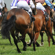 Charity calls for smaller Grand National