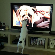 Pogdogs is a TV favourite for pets