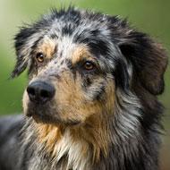 Dog flu outbreak reaches 1,000 cases