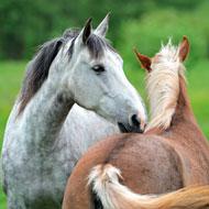 More work needed to strengthen horse industry