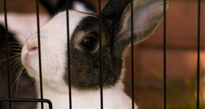 Experts set out vision for rabbit welfare