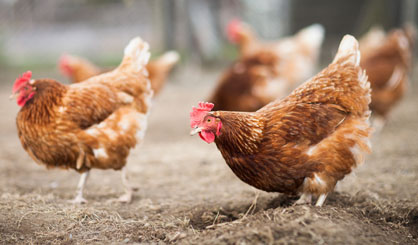 Vaccine developed for H5N1 and H7N9
