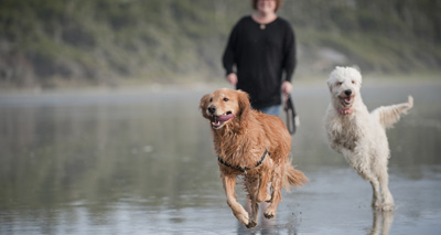 Dogs domesticated earlier than first thought