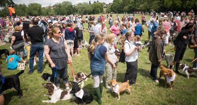 Charity beats record for bandana-wearing dogs