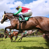Jumping horses test positive for banned substances