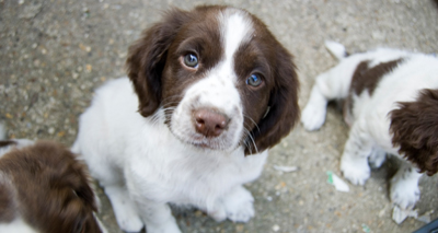 Illegal pet importers must be 'brought to justice'