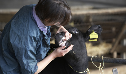 Over half of farm vets injured at work