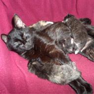 Abandoned cat nurses orphan kittens