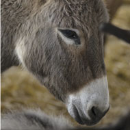 Guidance aims to protect donkeys in transit
