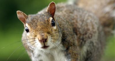 'Drunk' squirrel causes chaos at bar